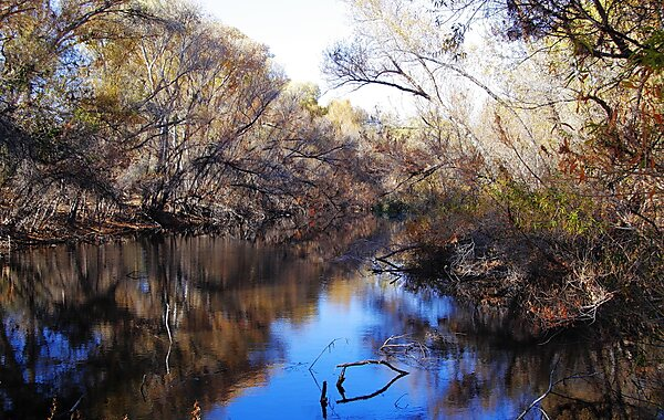 Wickenburg (AZ) United States  city photo : Hassayampa River Preserve Wickenburg in United States