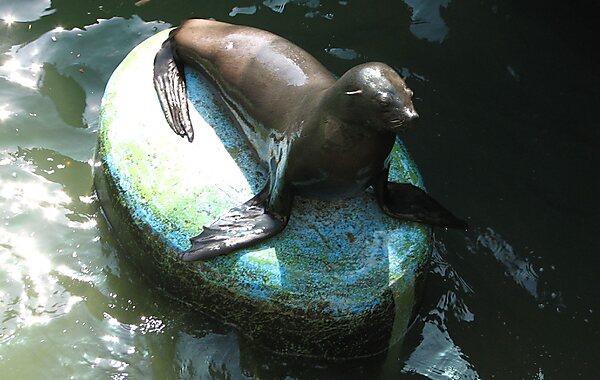 Brno Zoo in Brno, Czech Republic