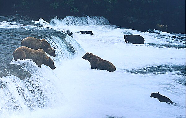 Katmai National Park and Preserve – Alaska | Tripomatic