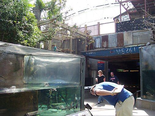 Florida Aquarium Tampa Sygic Travel