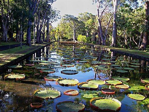 Pamplemousses botanical garden mauritius tripomatic for Jardin wilson nice