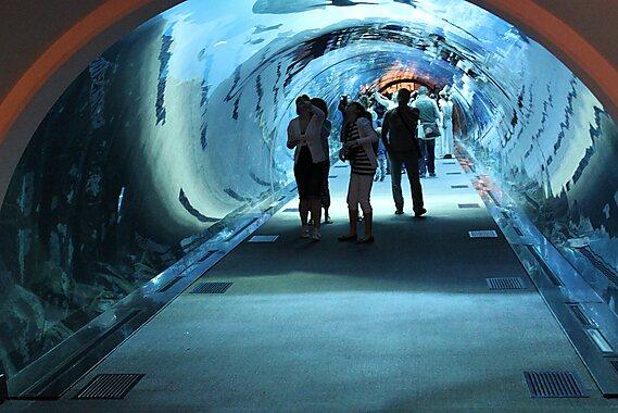 Dubai Aquarium Underwater Zoo Dubai Tripomatic