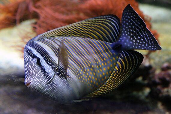 Civic Aquarium of Milan - Milan Sygic Travel